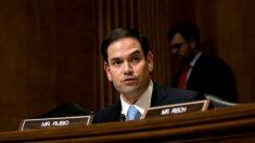 12 senadores bipartidistas piden respuestas a Zoom por cierre de cuentas en aniversario de Tiananmen