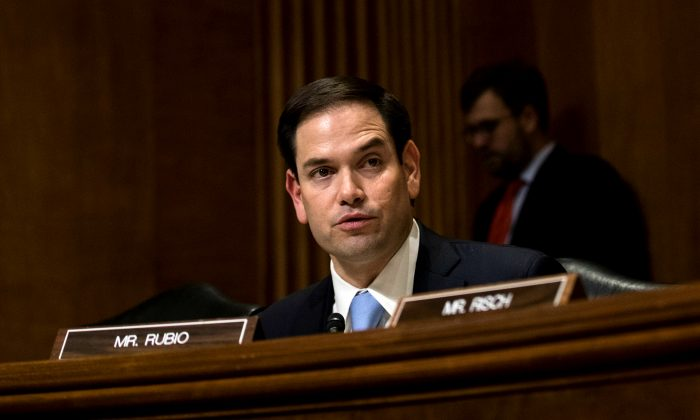 El senador republicano estadounidense de Florida, Marco Rubio, durante una audiencia de negocios del Comité de Relaciones Exteriores del Senado en el Capitolio de Washington el 21 de enero de 2017. (Drew Angerer/Getty Images)