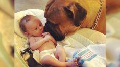Perrito fiel consuela a bebé recién nacido trayéndole su juguete favorito cada vez que llora