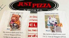 Pizzería pone fotos de perros de refugio en cajas de entrega para ayudarlos a encontrar un hogar