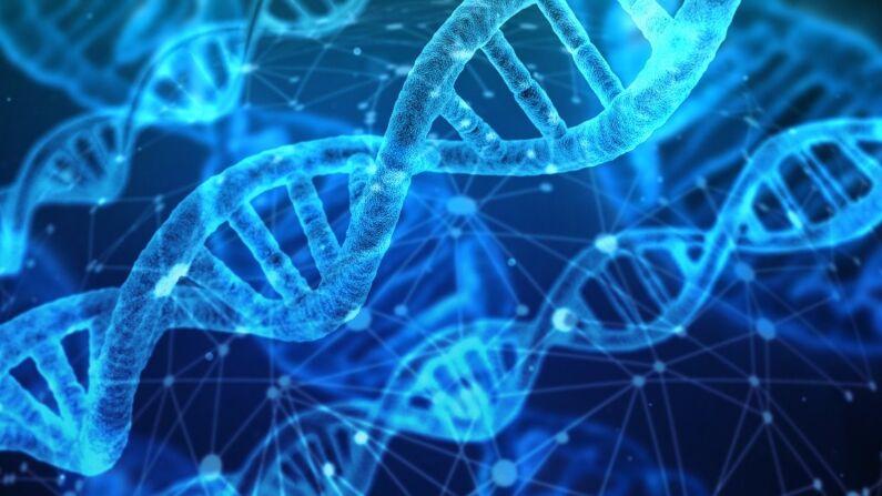 La edición genética promete un ajuste preciso del genoma humano, aunque los científicos no tienen ni idea de las implicaciones a largo plazo de estas manipulaciones. (Pixabay)