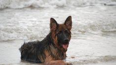 Perrita estuvo varada en el mar durante 11 horas antes de que los rescatistas la encontraran