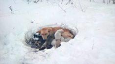 Perrita con sus cachorros rescatados de la nieve ahora prosperan en un hogar para siempre