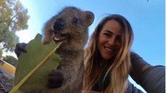 Conoce a los Quokkas, estas lindas criaturas son los animales más felices del mundo