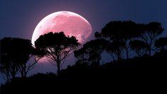 """""""Superluna rosa"""" de abril al llegar la primavera, posiblemente el evento lunar más brillante de 2020"""