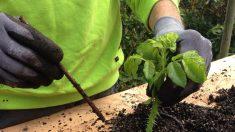 Actividad familiar en épocas de distanciamiento social: Cómo comenzar un huerto en el patio de casa