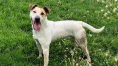 Perro abandonado finalmente es adoptado después de pasar 2000 días en un refugio de animales