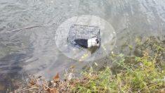 Rescata un cachorro que fue arrojado a un lago de agua helada en una jaula y le da un nuevo hogar
