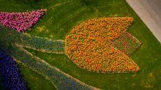 Fotógrafo captura imágenes del jardín de flores más hermoso del mundo sin visitantes