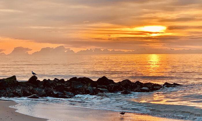 La isla de Edisto sigue siendo un paraíso natural incomparable. (Melinda Miley)