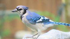 Una guía para principiantes sobre la observación de aves en el patio trasero