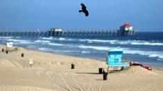 Newsom aprueba reapertura de 2 playas de la ciudad del Condado de Orange para la 'Recreación activa'