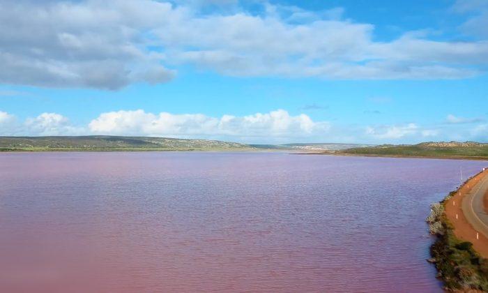 Arroyo de Melbourne se tornó color rosa brillante, autoridades ambientales investigan qué sucedió