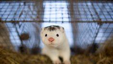 Investigan posible primer caso de contagio de COVID-19 en el mundo de un animal a un humano