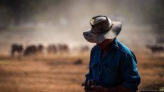 Arancel chino a la cebada australiana sería un ejemplo de tácticas de coerción económica