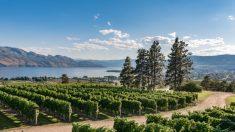 Valle de Okanagan: la cumbre de la viticultura