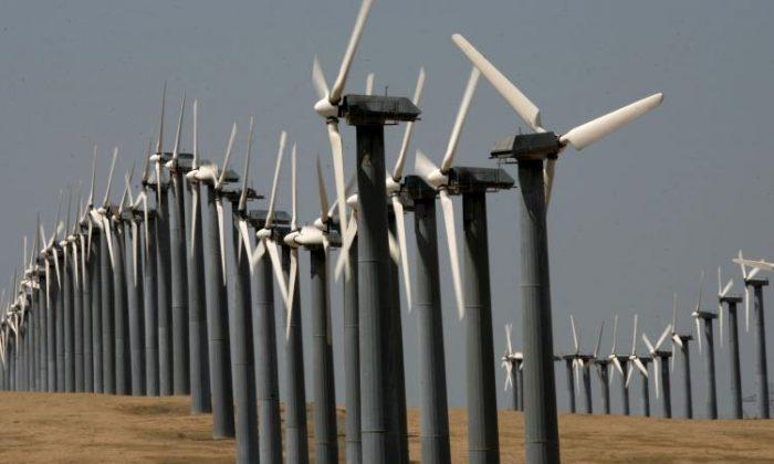 Filas de turbinas eólicas en el parque eólico de Altamont Pass en Byron, California. (Justin Sullivan/Getty Images)