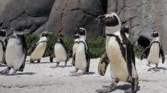Cierre permanente de zoológico deja a cientos de animales marinos con urgente necesidad de un hogar