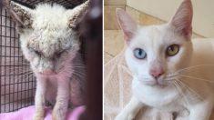 """Gato """"ciego"""" rescatado finalmente abre sus ojos para revelar dos asombrosos colores diferentes"""