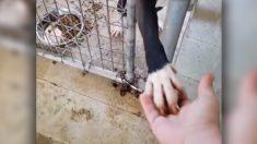 Perro de refugio que toma la mano a cualquiera que pasa por su perrera gana fama y un cariñoso hogar