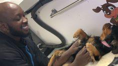 """El """"Padrino de Harlem"""" ofrece servicio de aseo gratuito a dueños de mascotas afectadas por pandemia"""