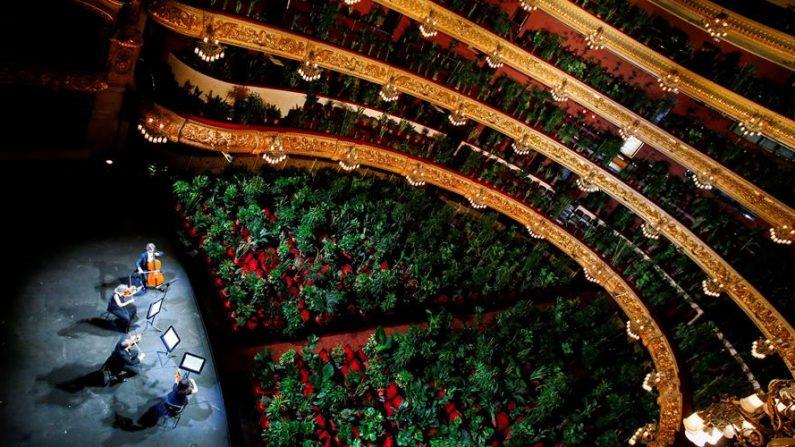 """El artista Eugenio Ampudia inicia la actividad en el Liceu con un concierto a cargo de un cuarteto de cuerda para un """"público"""" formado por 2292 plantas, que luego serán entregadas a personal sanitario del Hospital Clínico de Barcelona. EFE/ Quique García"""