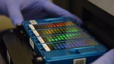 Beijing construye base de datos de ADN de amplia magnitud violando DD.HH., según expertos australianos