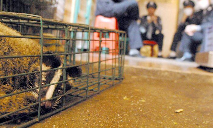 Trabajadores de la salud chinos y la policía vigilan los últimos gatos silvestres que quedan confiscados de un mercado de vida silvestre en Guangzhou, en la sureña provincia de China de Guangdong el 6 de enero de 2004. (-/AFP vía Getty Images)