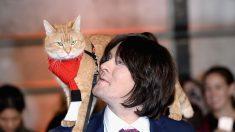 Bob, el gato callejero más famoso, que ayudó a su dueño a dejar la heroína, muere a los 14 años