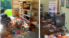 Refugio de animales de Luisiana es objeto de vandalismo y de contaminación de alimentos para perros
