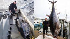Pescador de Virginia establece record atrapando enorme atún de 700 libras y 9 pies de largo