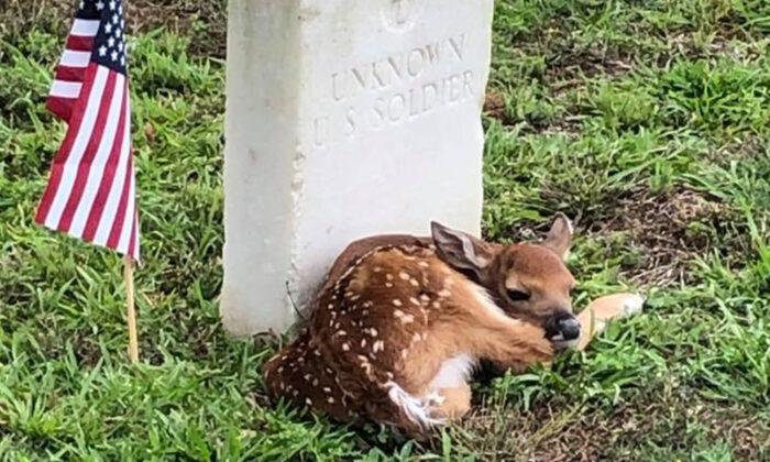 (Crédito: foto del Servicio de Parques Nacionales, tomada en el Sitio Histórico Nacional de Andersonville)