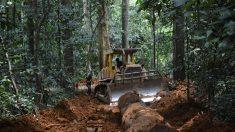 La tala ilegal que alienta China y amenaza los bosques de África