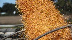 China compra cantidades récord de productos agrícolas de EE.UU. por posible escasez de alimentos