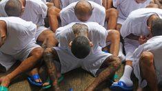 Familiares de víctimas aliviados de ofensiva de EE.UU. contra pandilla MS-13
