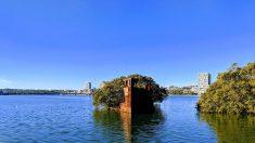 """Cubierta de un naufragio de 157 años se transforma en """"bosque flotante"""" con manglares en Australia"""