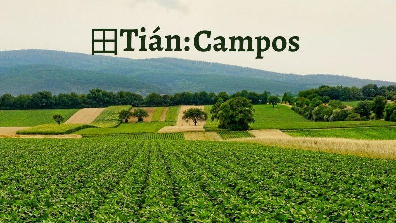 田 (tián) es un pictograma que representa parcelas de tierra cultivada. (Schwoaze/Pixabay)