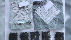 Residentes de varios estados de EE. UU. reciben misteriosos paquetes de semillas de China