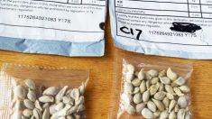 Policía y autoridades: semillas enviadas desde China a casas en EE.UU. son una estafa