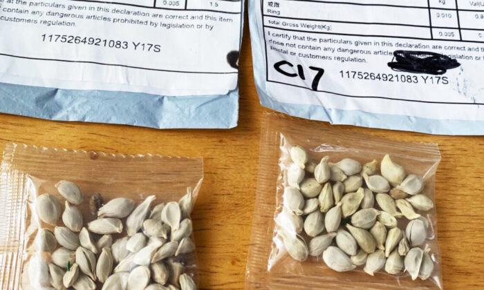 Dos paquetes que contienen semillas desconocidas de China. (Departamento de Agricultura del Estado de Washington)