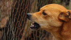 Pequeño salvó a su hermanita del ataque de un perro y quedó con su rostro casi desfigurado