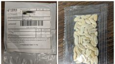 Los 50 estados de EE.UU advierten sobre paquetes de semillas no solicitados procedentes de China