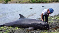 Hallan 18 delfines y marsopas muertos en Mauricio tras derrame de petróleo