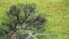 """El gobierno federal y empresas de EE. UU. apuestan por la iniciativa """"1 Trillion Trees"""""""