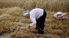 Beijing elimina videos donde se come en exceso mientras el país enfrenta la escasez de alimentos