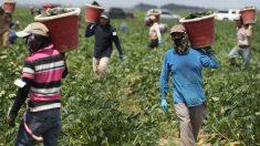 Sentencian a latino que cobraba hasta 4000 dólares por visas de trabajo