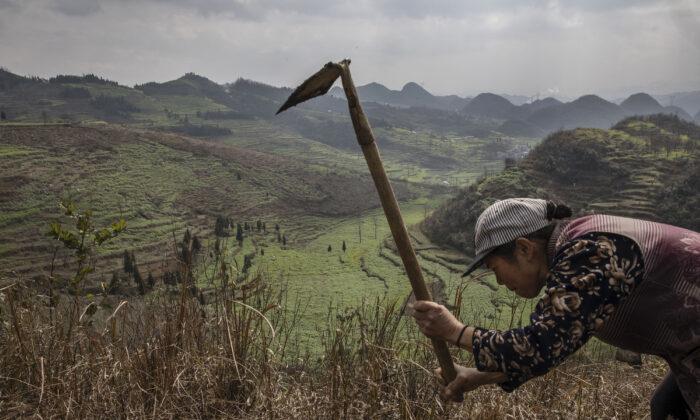 Una aldeana de Yi trabaja en un campo con vistas a la zona de Long Horn Miao de Longga, provincia de Guizhou, al sur de China, el 7 de febrero de 2017. (Kevin Frayer/Getty Images)