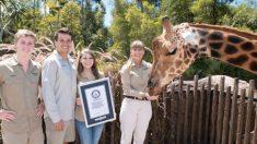 """""""Forest"""", la jirafa de 5.7 metros de altura del Zoológico de Australia, es la más alta del mundo"""