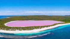 Fotógrafo captura imágenes de ensueño de un impresionantes lago color rosado en Australia