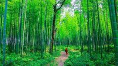 Si quieres recuperar el honor, el comportamiento debe ser tan recto como el bambú